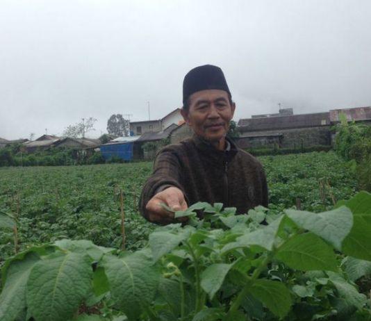 Petani Kentang dari Desa Batur, Kabupaten Banjarnegara, Ahmad Mu?tamir (64).(KOMPAS.com/NAZAR NURDIN)