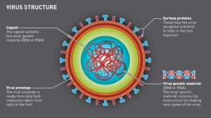 Everything you need to know about viruses – research