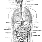 Gastrointestinal Diseases Symptoms and Causes