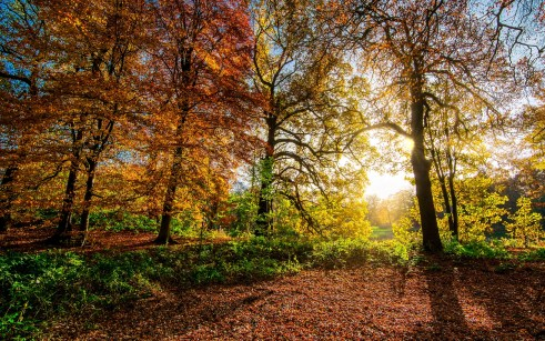 autumn-leaves-2963220_1920