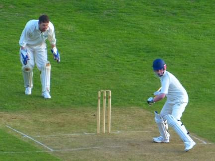 cricket-510043_1920