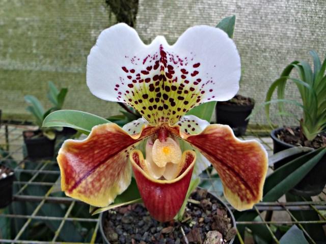 Orchids at Entre Flores