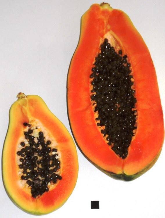 Papaya, photo by Genet