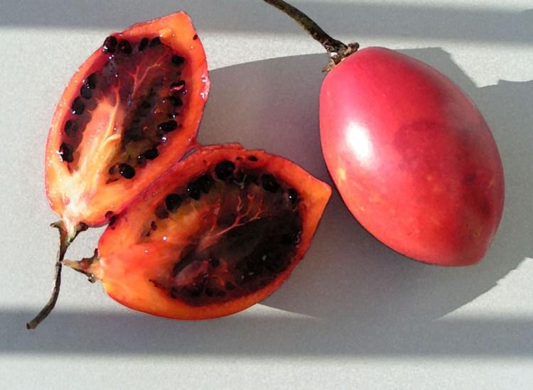 Tomate de Arbol, photo by Michael Clarke
