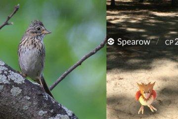 Spearow-860x484