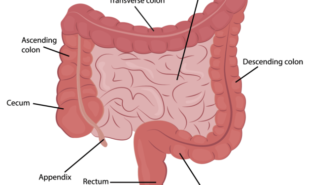 Physiology and Pharmacology of the Large Intestine MCQ