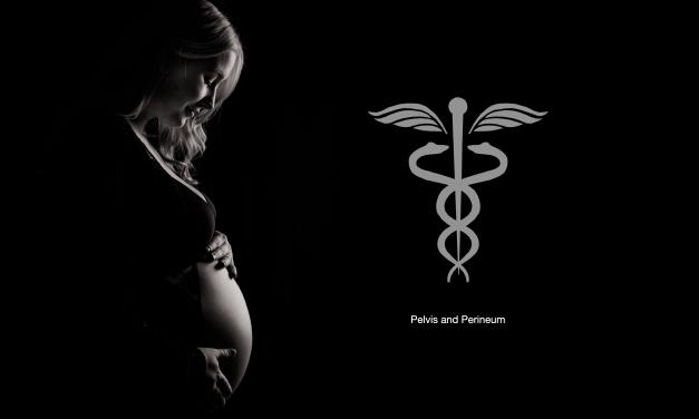 Pelvis and Perineum Anatomy – Part Five