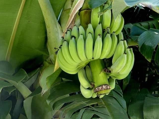 banana-lentil-soup-recipe-dalma