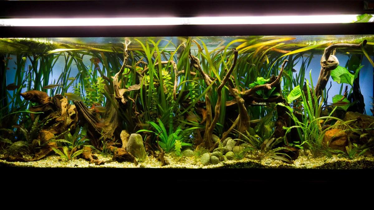 aquarium lighting guide for fish owners