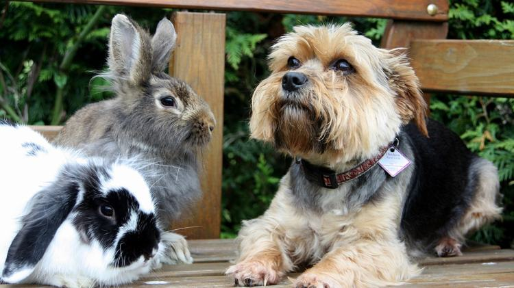 Can Rabbits And Dogs Live In The Same Home?
