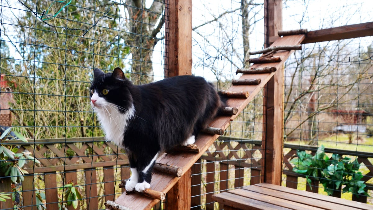 tips to create outdoor cat enclosures