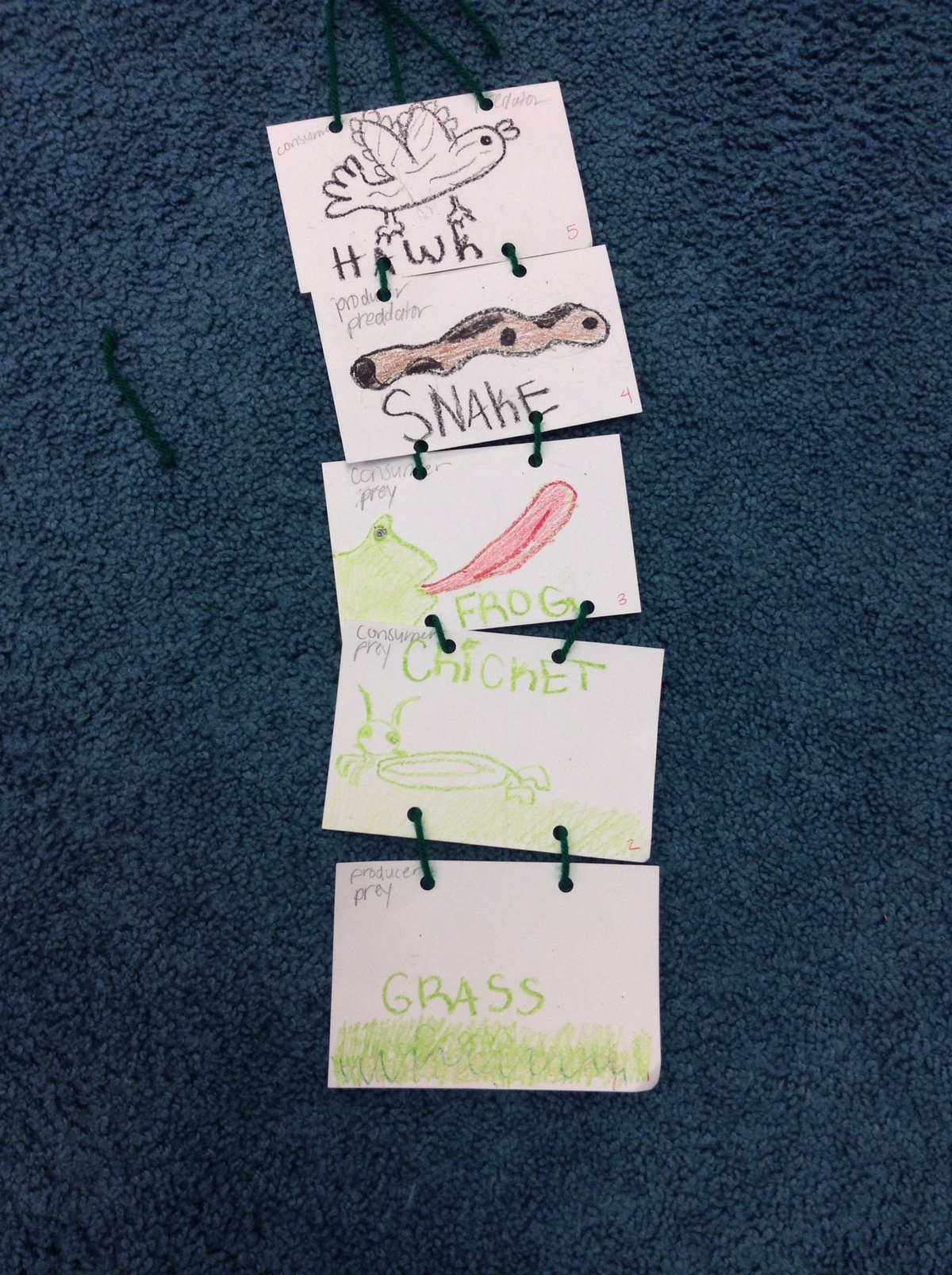 Food Chains Worksheets And Chains