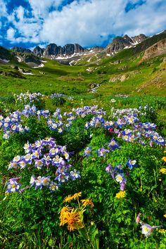 Where Wildflowers Grow on Pinterest   Wildflowers, Indian ...
