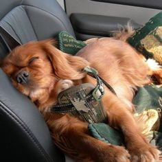 Ruby Cavalier, Car Seats, Beautiful Ruby, Mimi Time, Tough Life, Hard ...