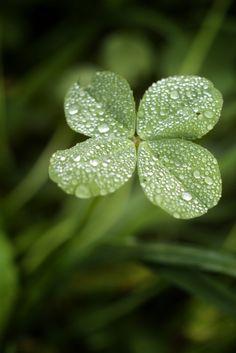 Luck o' the Irish, Four Leaf Clover