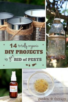 DIY projects to get rid of bugs and pests
