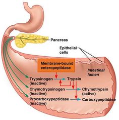 Anatomy And Physiology on Pinterest | Circulatory System ...