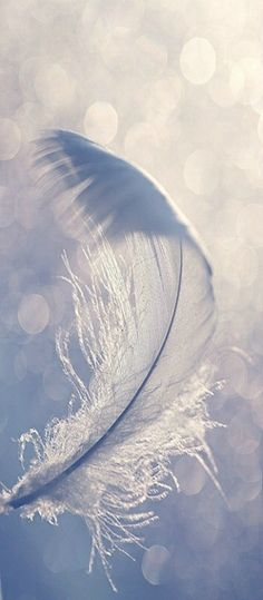 ~ bokeh feather ~
