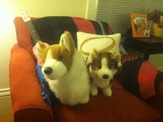 """""""Do my two stuffed corgis count as pets?"""" -@Leslie Kincaid"""