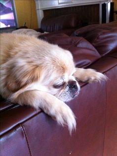 @Abhi Khune's doggy Romeo