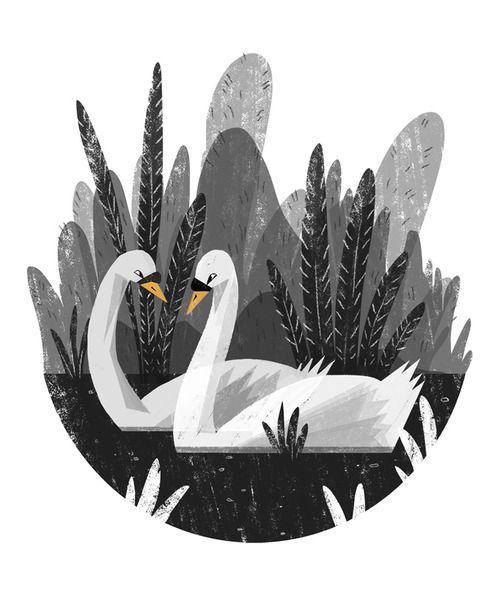 Ella Bailey Illustration. Swans.