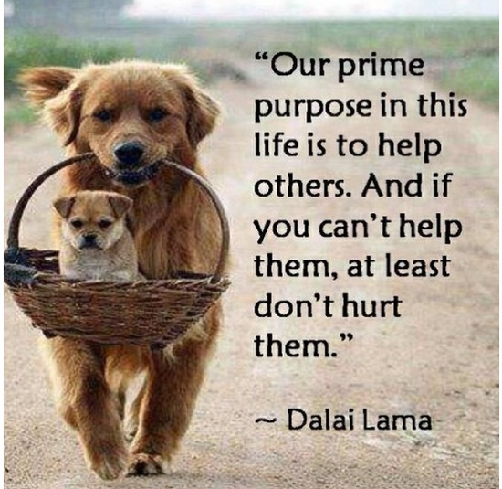 Help others & always be kind to one another