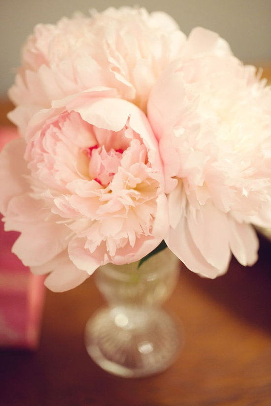 peonies...my favorite flower!