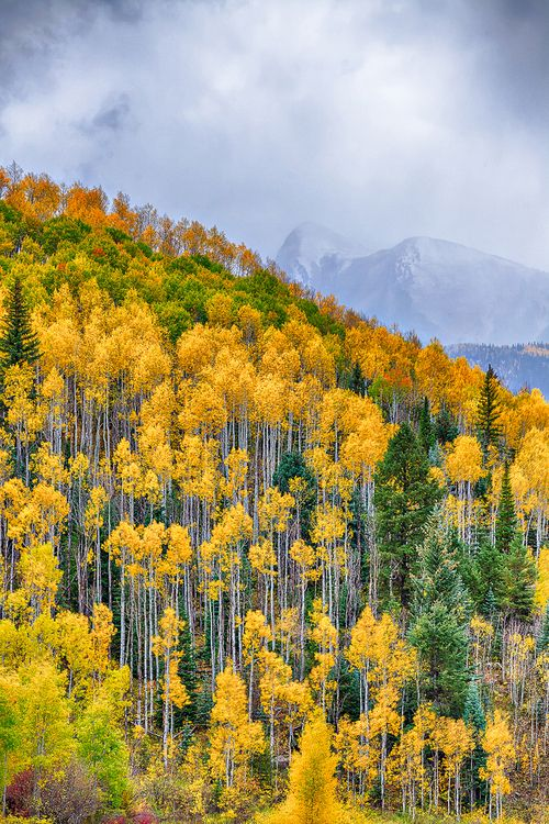 Along the Million Dollar Highway, Aspen, Colorado, USA