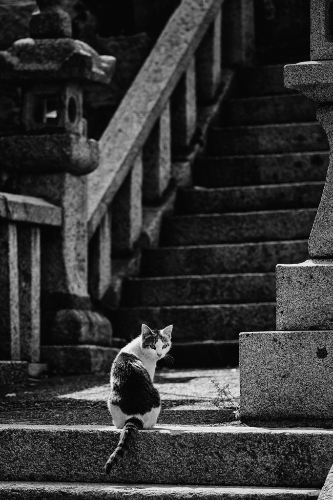 Street cat at some shrine in Aoshima, Miyazaki, Japan