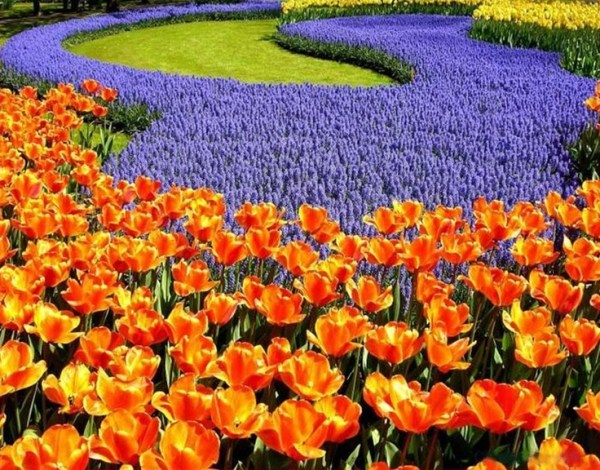 purple and orange flower garden Pinterest: Discover and save creative ideas