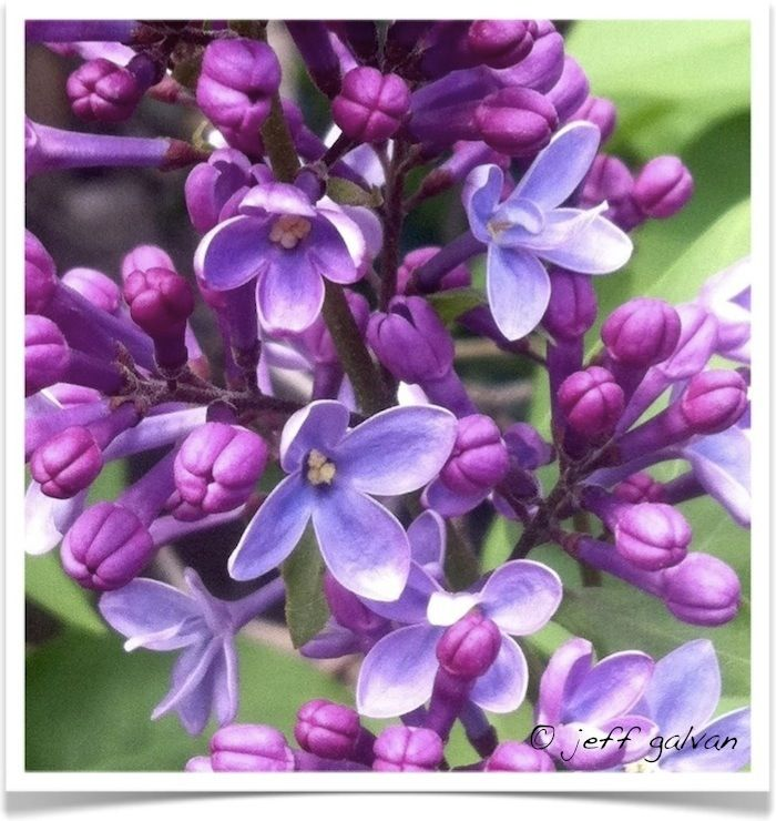 #Pantone Color of the Year 2014 Is Radiant Orchid | Lilac