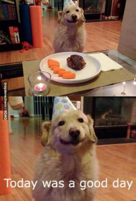 """That happy face on that birthday dog...it just makes me smile. He's saying, """"Today was a good day!"""""""
