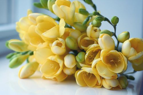 Delicate yellow blooms #weddingbouquet #weddingflowers #yellowwedding #weddinginspiration
