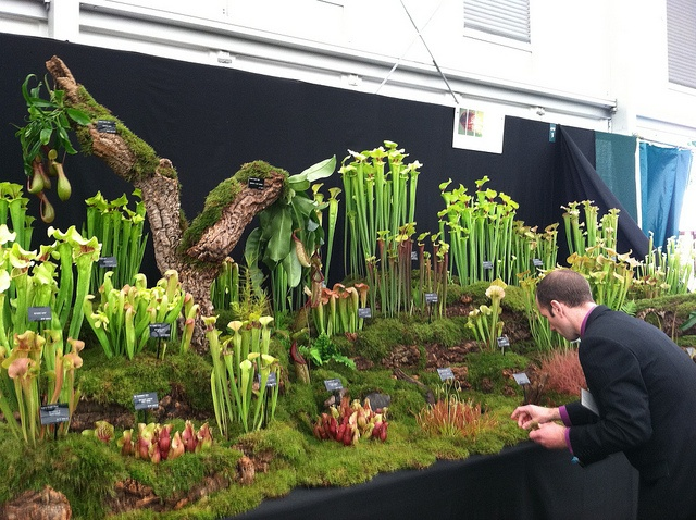 Plant show in Seattle.... Preparing Carnivorous Plant Display by NextGenGardener, via Flickr