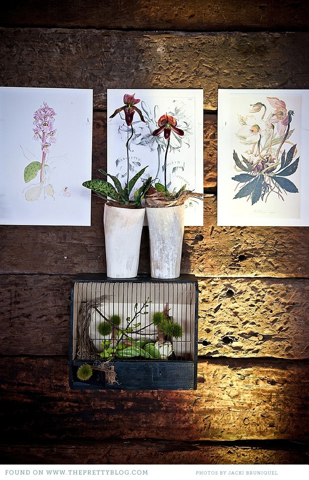 Orchids against botanical prints