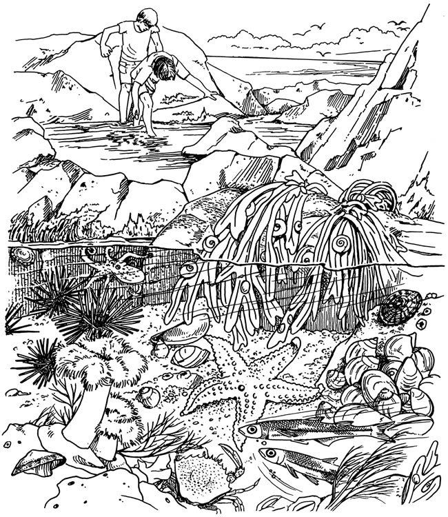 pinbrenda youngs on coloring pages first edition