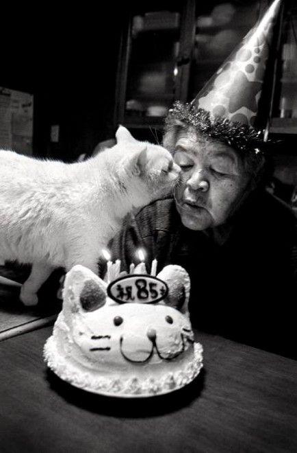 Giappone, fotostoria di un'amicizia: la nonna e il gatto dall'occhio di ghiaccio # fotografia # Giappone # Animali # gatto
