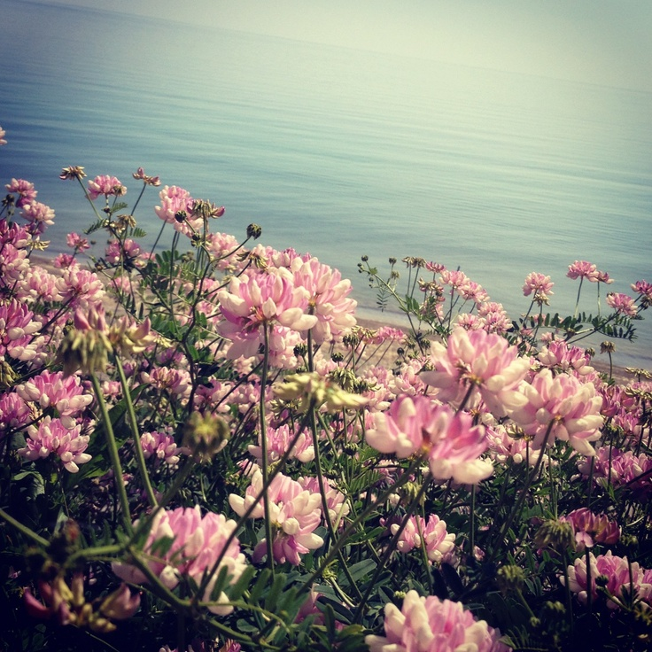 #nature #flowers #photography #scenery