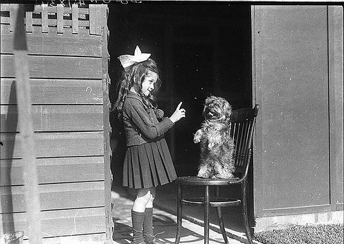 Girl teaching dog to sit