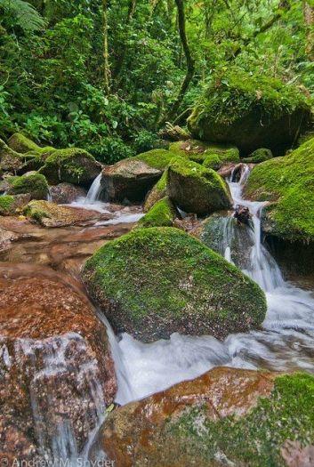 Image result for cusuco national park