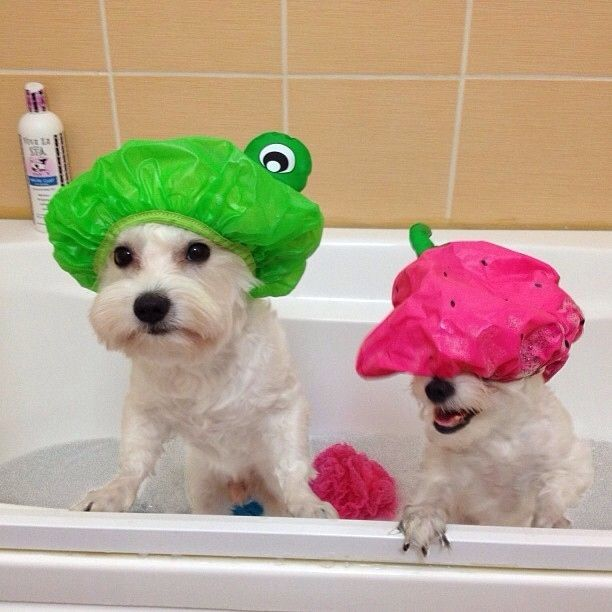 38 Brilliant Dog Care Ideas to Make Your Life Easier:  11) Use a teapot to rinse dogs off in the bathtub without getting water and soap in their eyes.
