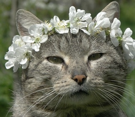 floral crown cat