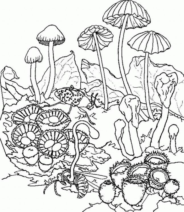 trippy  printablecoloring pages  pinterest