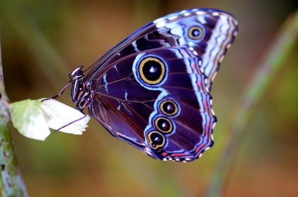such gorgeous colours in this butterfly