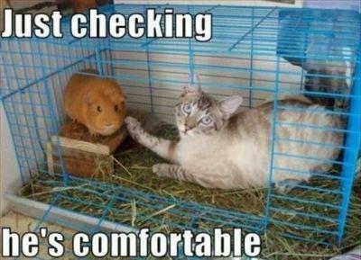Hahaha Funny