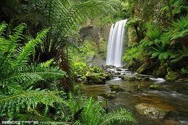 lush rainforest - Google Search