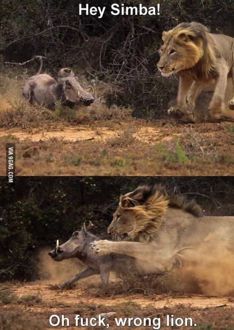 Hey Simba!