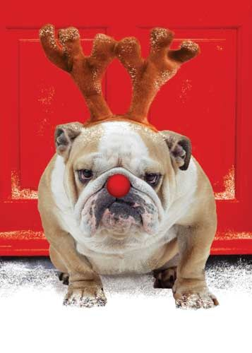 Grumpy Cat, meet Grumpy Dog. (slash Rudolph)