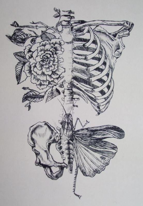 Soft Anatomy by Rebecca Ladd