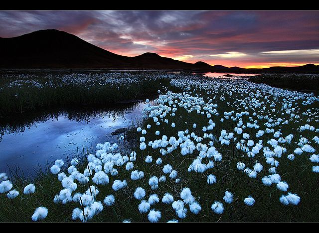 Landmannalaugar Iceland | Cotton Field - Landmannalaugar, Iceland | Flickr - Photo Sharing!